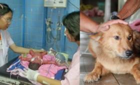 """Σκύλος έσωσε νεογέννητο που βρήκε στα σκουπίδια εν αντιθέσει μέ μιά """"σκύλα"""" μάνα!"""